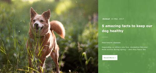 Animal Post Slider