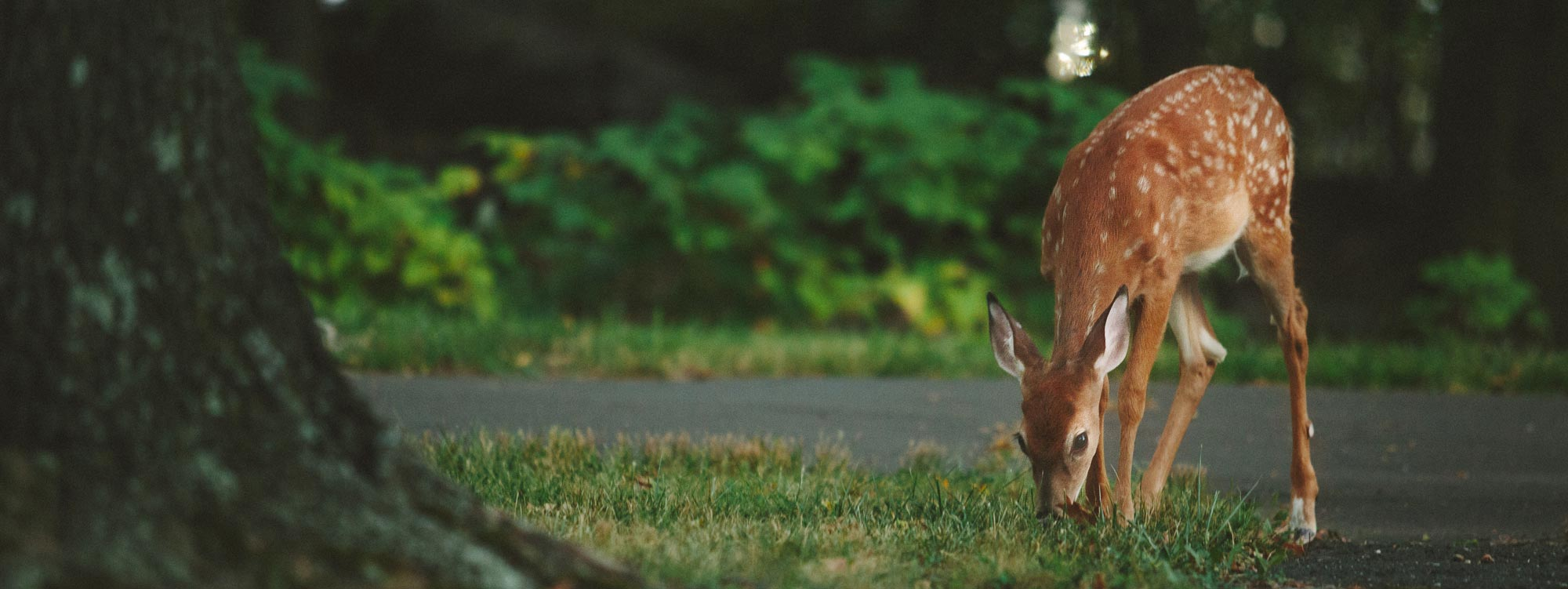 deer-slider-2