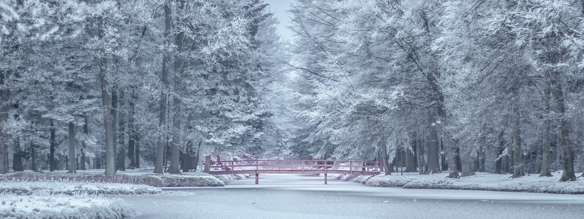 snow bg 2